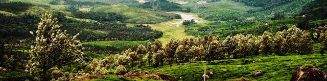 Плантации чая в Munnar, Керале в Индии с зеленым лесом Стоковые Фото