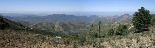 Плантации чая около Kalaw в положении Шани, Мьянме стоковые фотографии rf