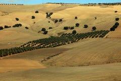 плантации andalusia прованские Стоковое Фото
