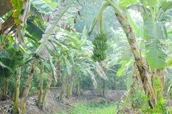 Плантация банана около водного пути стоковое изображение