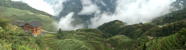 плантация вершины холма Стоковые Фотографии RF