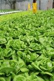 плантация земледелия 02 hydroponic Стоковое Изображение RF