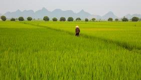 Плантация и человек риса Стоковая Фотография