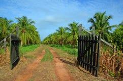 плантация кокоса стоковое изображение