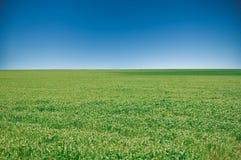 Плантация кукурузного поля в Аргентине стоковое изображение rf