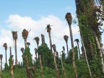 плантация ладони Стоковая Фотография RF
