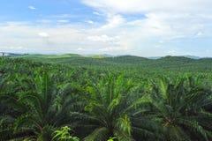 Плантация пальмового масла стоковые изображения rf