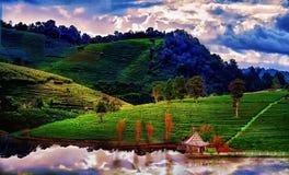 Плантация чая весной, голубое небо и никогда видимое облако стоковые фотографии rf