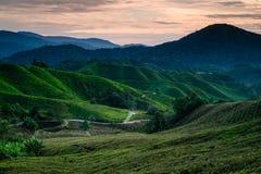 Плантация чая гористых местностей Камерона во время восхода солнца стоковое изображение rf
