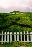 Плантация чая долины Камерона принятая в гористую местность Камерона стоковые фото