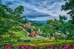 Плантация чая на Doi Mae Salong в Chiang Rai, Таиланде Стоковые Фотографии RF