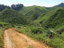 Плантация чая стоковое изображение