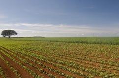 плантация Стоковые Фотографии RF