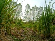 Планы, зеленый цвет, естественный, органический, сухой стоковое фото rf