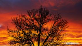 План дерева на заходе солнца стоковые изображения rf