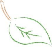 план листьев Стоковое Изображение RF