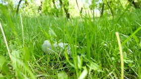 Пластиковая бутылка лежа на зеленой траве в парке Отброс, повреждение к окружающей среде видеоматериал