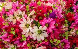 Пластиковые цветки подделывают цветки стоковые изображения