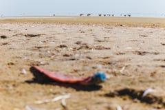 Пластичная бутылка брошенная на берег озера Стоковая Фотография