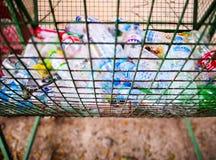 Пластичные бутылки в погани стоковые изображения rf