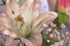 Пластичные цветки в корзине на старом деревянном поле стоковые изображения rf