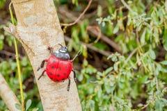 Пластичный ladybug на дереве Стоковое Фото