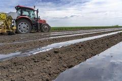Пластмасса мульчирует кровать кладя для продукции овоща стоковые изображения rf