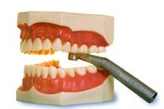 пластмасса челюсти Стоковая Фотография