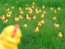 пластмасса 6 цыпленоков шальная Стоковая Фотография RF