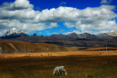 плато sichuan ландшафта западный Стоковое Изображение RF