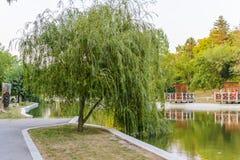 Плача верба в парке Dobrich Стоковые Фото