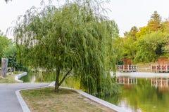 Плача верба в парке Dobrich Стоковые Фотографии RF