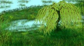 Плача верба на озере стоковые изображения rf