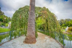 Плача верба около виска Дианы pond в вилле Durazzo- Pallavicini в Генуе Pegli, Италии Стоковое Фото