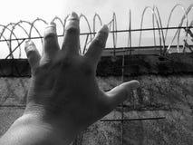 пленник стоковые фотографии rf