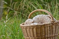Плетеная корзина вполне грибов в лесе на зеленой траве Стоковая Фотография