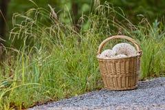 Плетеная корзина вполне грибов в лесе на зеленой траве Стоковое Изображение