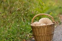 Плетеная корзина вполне грибов в лесе на зеленой траве Стоковые Фото