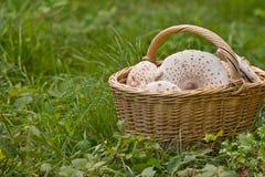 Плетеная корзина вполне грибов в лесе на зеленой траве Стоковое Фото