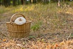 Плетеная корзина вполне грибов в лесе Стоковое Изображение