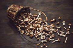 Плетеная корзина с свежей осенью пластинчатых грибов меда грибов Стоковое Изображение RF