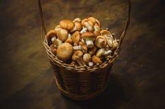 Плетеная корзина с свежей осенью пластинчатых грибов меда грибов Стоковая Фотография RF