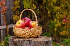 Плетеная корзина с яркими красными яблоками стоит на деревянный пень ag Стоковая Фотография RF