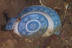 Плита в грязи в дне моря Стоковое Изображение RF