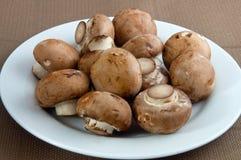плита грибов Стоковые Изображения RF
