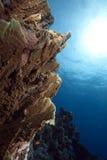 плита океана пожара коралла Стоковые Изображения RF