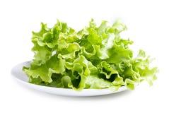 плита салатов листьев Стоковые Изображения RF