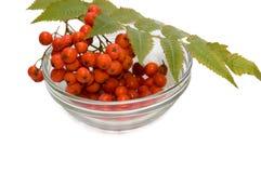 плита ягоды стоковые изображения