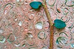 Плитки утеса раковины предпосылки темные розовые с creeper стержня и листьев Пористый крупный план текстуры скопируйте космос стоковое изображение rf