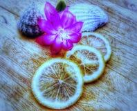 плодоовощи волшебство Лимон Природа Цветок сочно ингридиенты стоковое изображение
